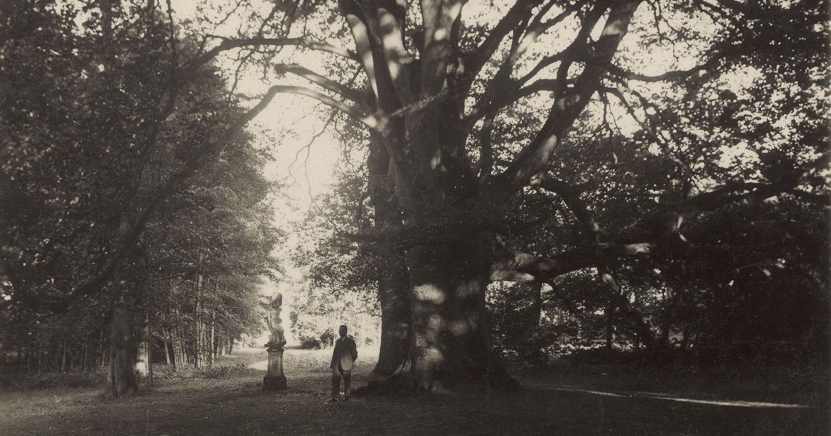 dikke buik, dikke boom › levend erfgoed groningen